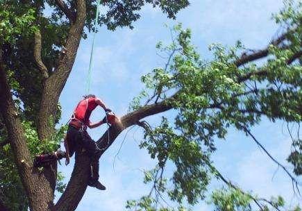 Zamówienie Wycinka i pielęgnacja drzew