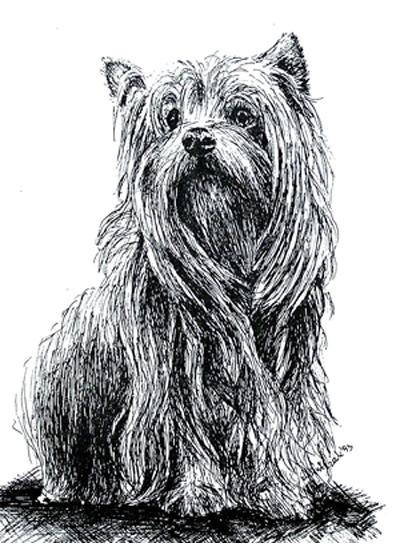 Zamówienie Portrety psów