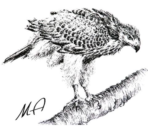 Zamówienie Portrety ptaków