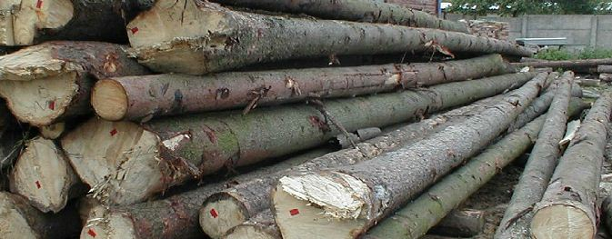 Zamówienie Gatunkowa dostawa drewna
