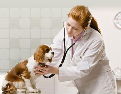 Zamówienie Badania diagnostyczne weterynaryjne