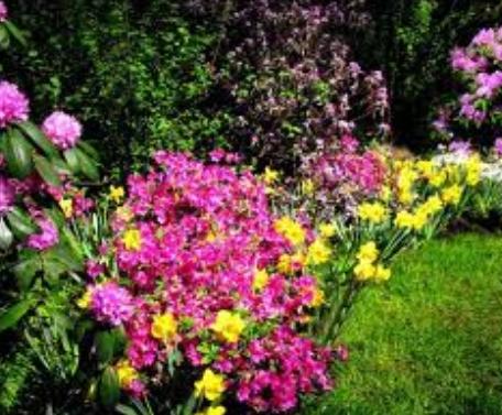 Zamówienie Pielęgnacja roślin ogrodowych