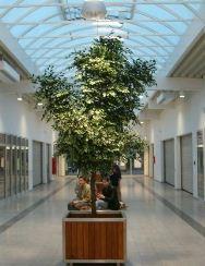 Zamówienie Projektowanie sztucznych krzewów na zamówienie