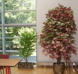Zamówienie Projekty sztucznych drzew do wyposażenia wnętrz publicznych