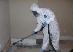 Usuwanie grzyba i pleśni z budynków