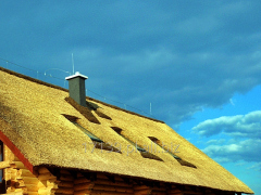 Roofing reed, thatch roof