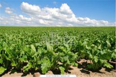 Wspieranie zgodnego z prawem korzystania z odmian roślin objętych ochroną prawną i zwalczanie przejawów naruszania wyłącznego prawa, w szczególności nielegalnego obrotu materiałem siewnym
