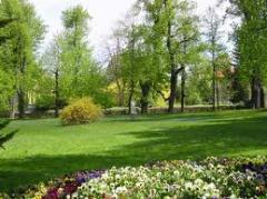 Nasadzenia zastepcze drzew i pielęgnacja