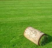 Trawniki siane i rolki