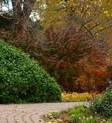 Dobór roślin do ogrodu