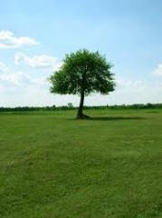 Wycinki drzew i prześwietlanie koron