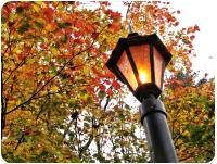 Oświetlenie i elektryczność w ogrodzie