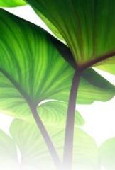 Całoroczną pielęgnację roślin