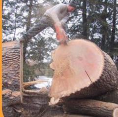 Usługi obróbki drewna.