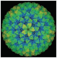 Usuwanie wirusów