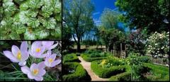 Projektowanie i wykonawstwo ogrodów