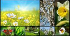 Twój nowy ogród- projektowanie i wykonawstwo