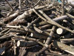 Skup drewna