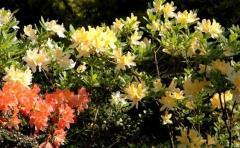 Dobór roślin do ogrodu projektowanie ogrodów