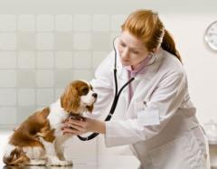 Leczenie zwierząt