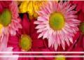 Wynajem klimatyzowanych pomieszczeń i chłodni na hali kwiatowej