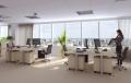Dezynsekcja i deratyzacja biur