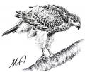 Portrety ptaków